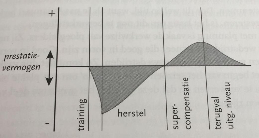 trainen herstel supercompensatie